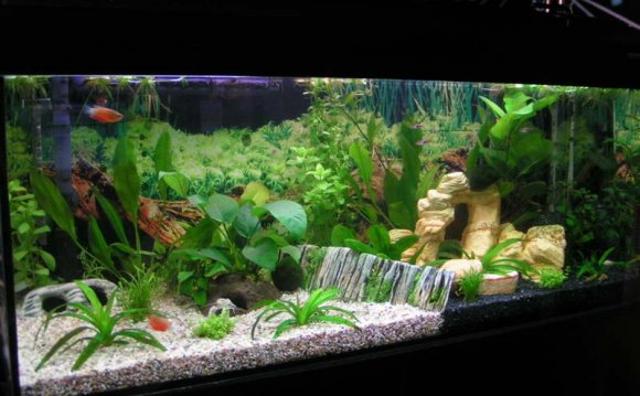1+ images about fish tank