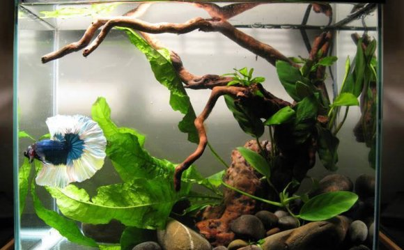 1+ images about Bettas Wabi