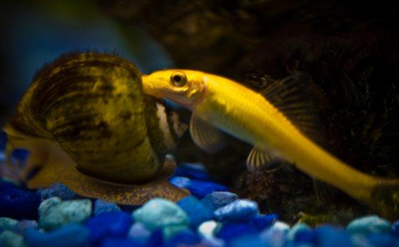 9 Best Algae Eaters for