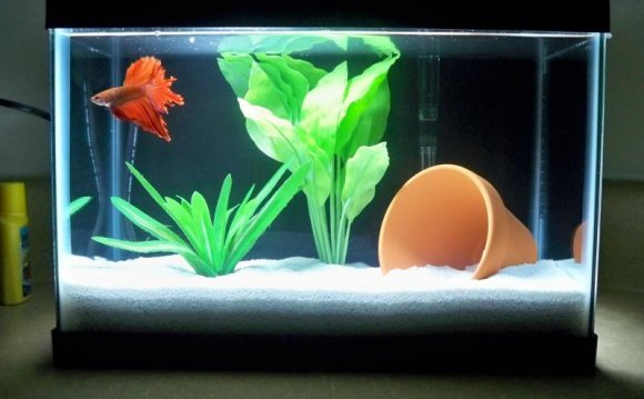 A 2.5 gallon betta tank