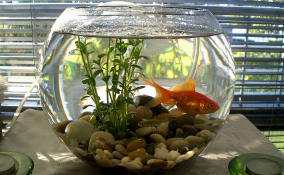 Air Pump For Fish Bowl