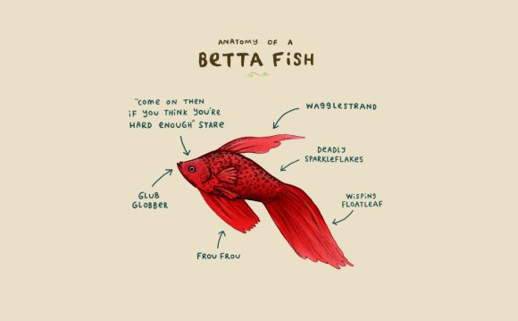 Anatomy of a Betta Fish - Lol
