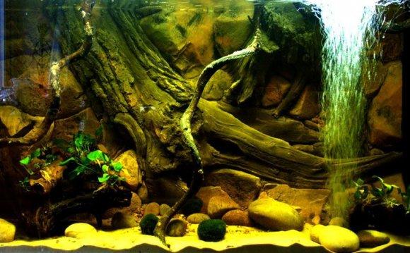 Aquarium backgrounds uk
