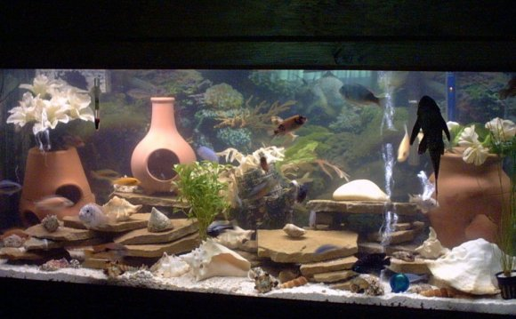 Aquarium decorations 75 gallon