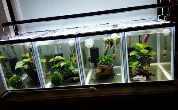 Aquarium Fish / Betta / Shrimp