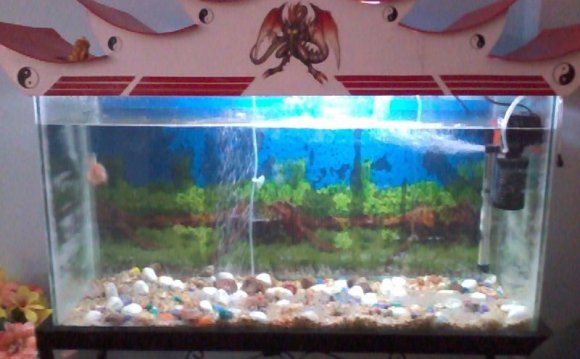 Aquarium for sale bangalore