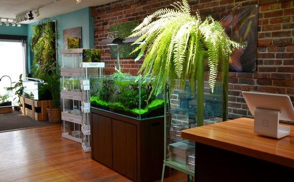 Aquarium-Zen-Seattle-Fish