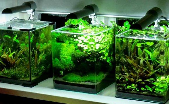 Best fish nano tank - Good