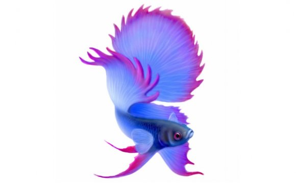 Betta Fighting Fish Holiday