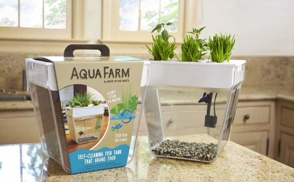 Plant Growing Betta Fish
