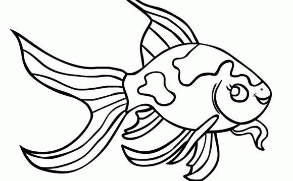 Goldfish Betta Fish Coloring