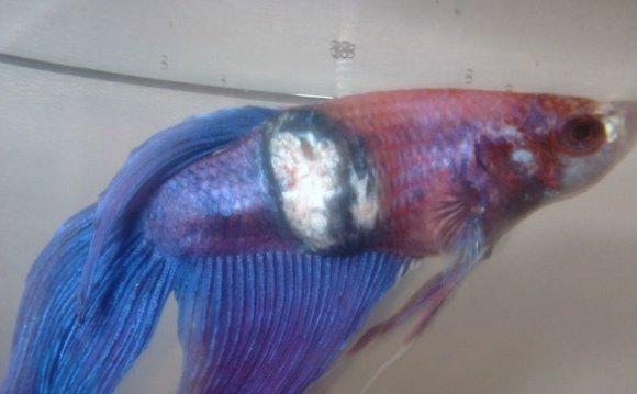 Http Www Tropicalfishkeeping