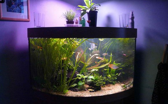 Image of: fish tank design