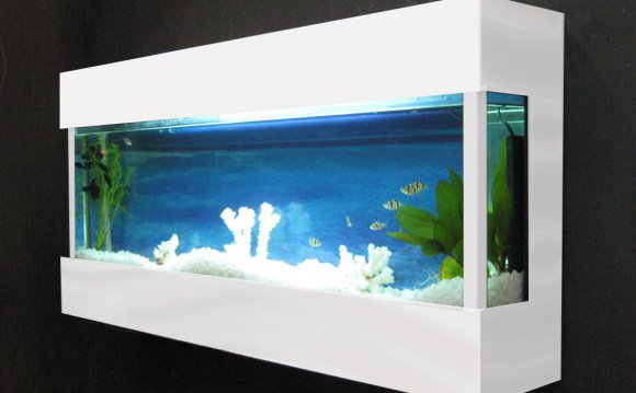 Betta Fish Tanks on Wall Fish