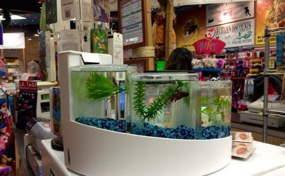 Betta Fish Tanks Petsmart