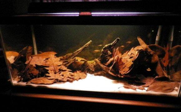 Black Water Aquarium Advice