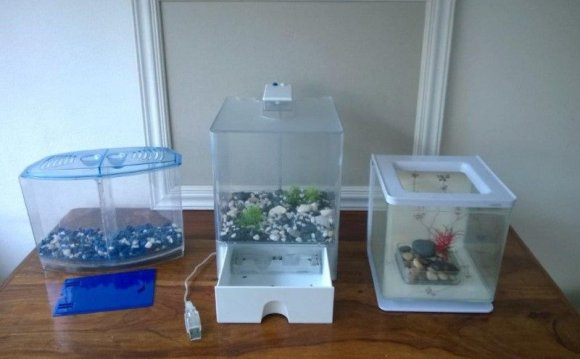 Siamese fighting fish tanks