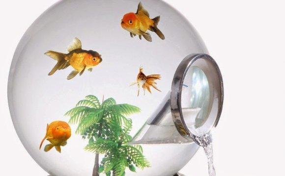 Cool betta fish tanks ~ make