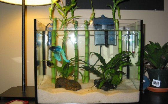 Astounding betta fish tanks