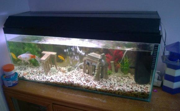 Fish tanks for sale dorset