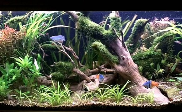 Aquascape ideas freshwater