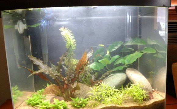 Bettas love plants!