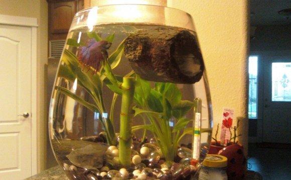 My Water In My Tank Keeps