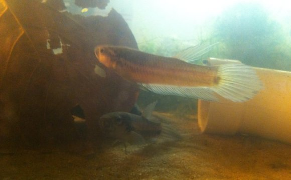 Betta fish tanks betta fish