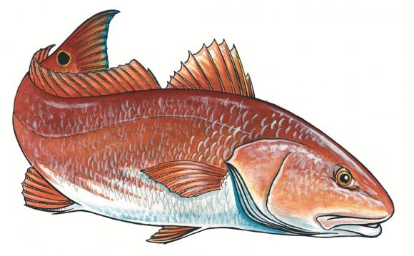 Redfish print by coastal