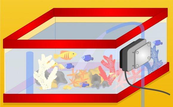 Set up a Marine Reef Aquarium