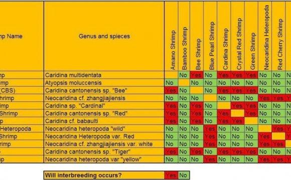 Shrimp Compatibility Chart