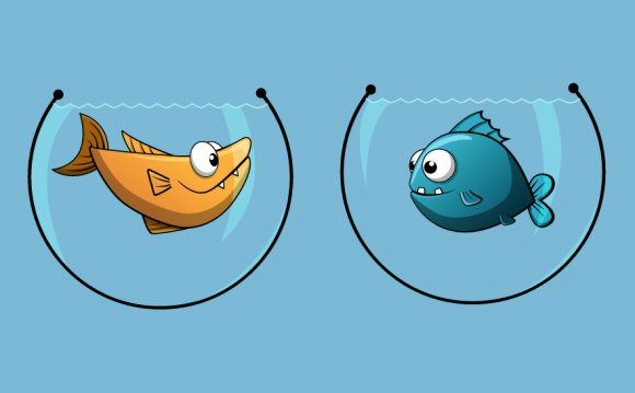 The Fish Bowl Guide