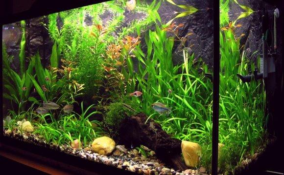 Tropical fish tank maintenance