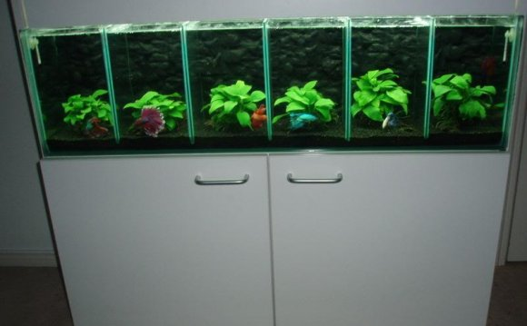 Tanks for Bettas