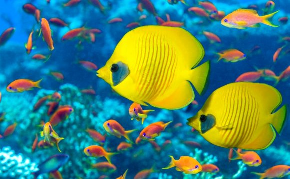 5 interesting Facts about fish