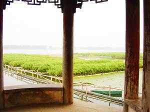 Aquaponics system largescale floating wetlands with vetiver roots protecting fish health in Aquaculture lake in China, courtesy Tom Duncan.