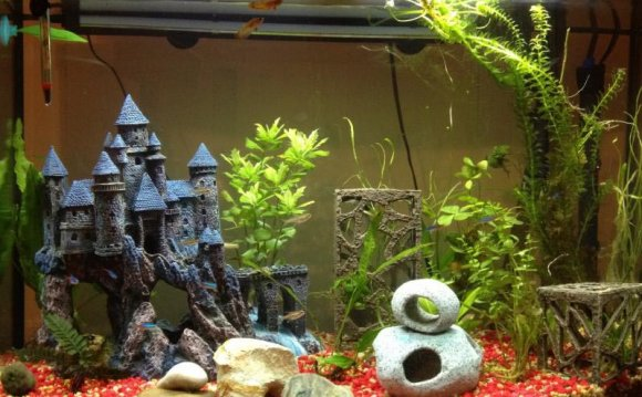 Best Betta fish tank Setup