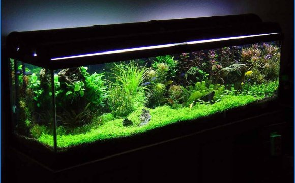 Betta fish Tanks with plants