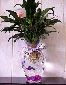 betta in a vase.jpg (40856 bytes)