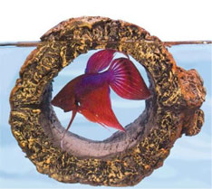 Floating Betta Fish Toy