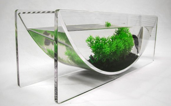 Betta fish bowl with plants