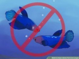 Image titled Help a Betta Fish Live Longer Step 6
