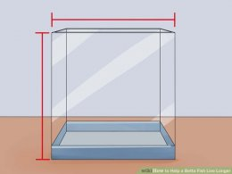 Image titled Help a Betta Fish Live Longer Step 7