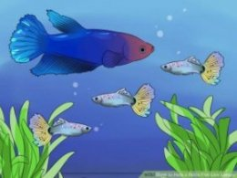Image titled Help a Betta Fish Live Longer Step 5