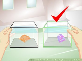 Image titled Provide a Protective Breeding Environment for Betta Fish Step 5