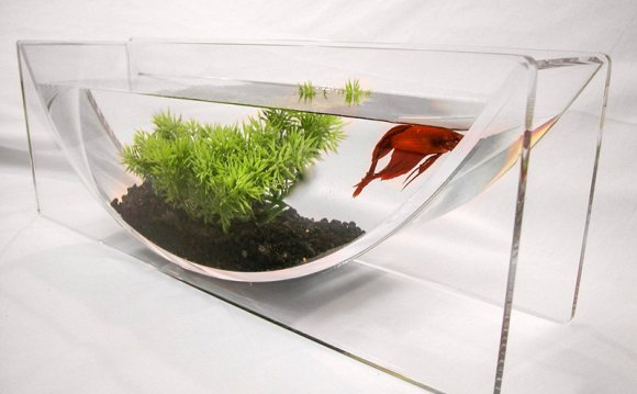 Why are Betta fish in small bowls?