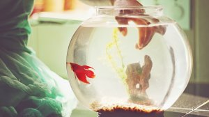 These no-fuss types of pet fish are a snap to keep and maintain