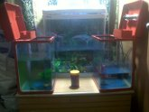 Betta breeding Supplies