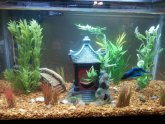 Betta fish Aquarium Ideas