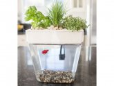 Betta fish Herb Garden